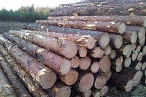 Pine-logs4