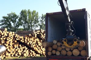 pine log Rastai 2